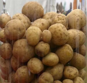 QUALTEC Pommes de terre (2003-2009)