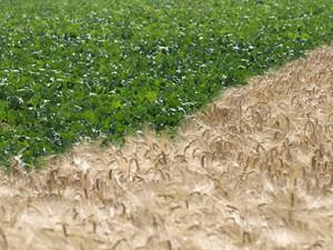 Sols et agro-systèmes