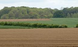 Protection intégrée du blé et de la pomme de terre (1997-2002)