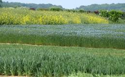 Analyse des cycles de vie agricole et territoriale