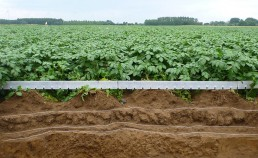 Sol-D'Phy : Gestion durable de la fertilité physique des sols cultivés (2012-2018)