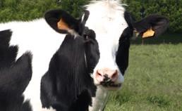 Complémentarités cultures-élevage (2014-2020)