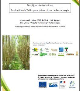 Production de taillis pour la fourniture de bois énergie