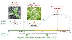 Evolution des reserves racinaires du chardon au cours de l'année