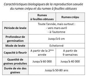 Modes de reproduction rumex