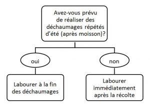 schéma de décision labour chiendent