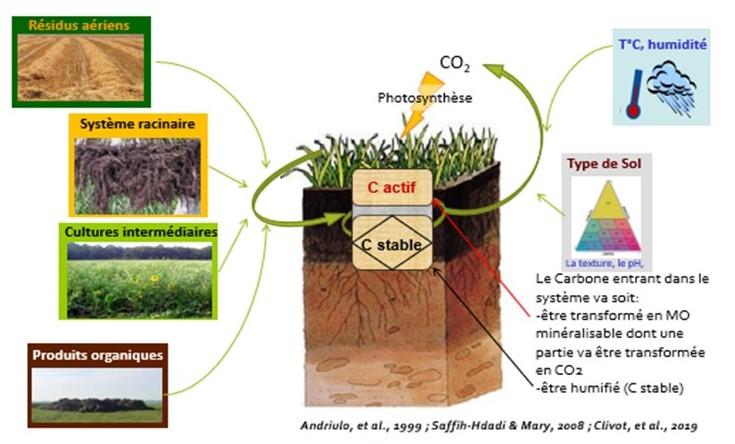 Devenir du carbone du sol