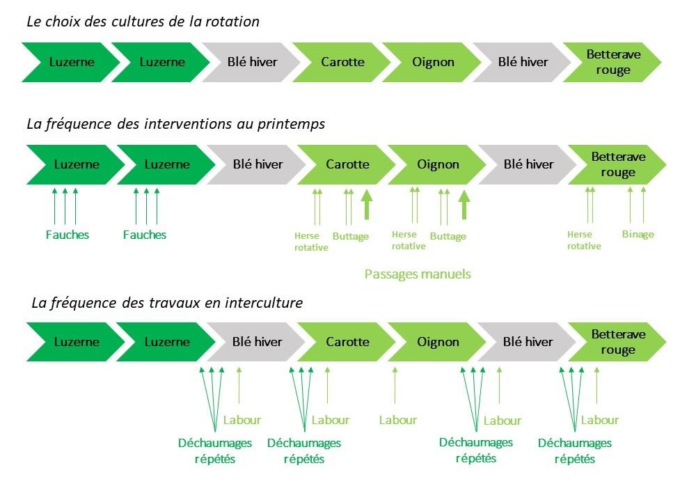 Description d'une stratégie de gestion du chardon efficace